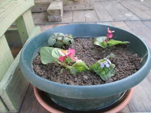 jardin (8)