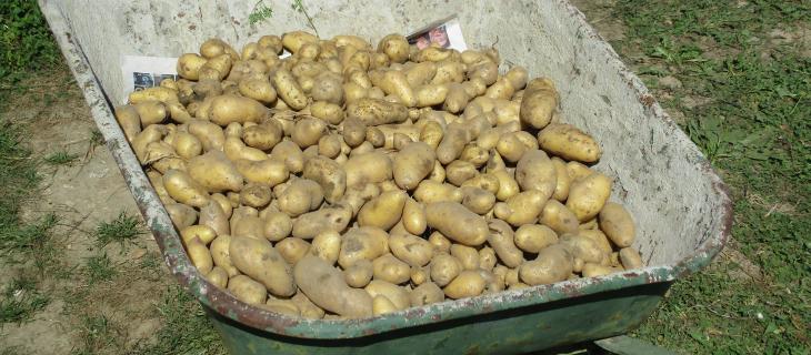 Slider Patates