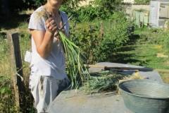 Préparation des plants
